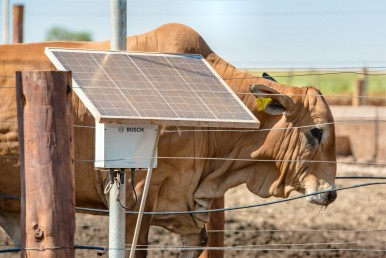 Bosch solar panel at cattle farm