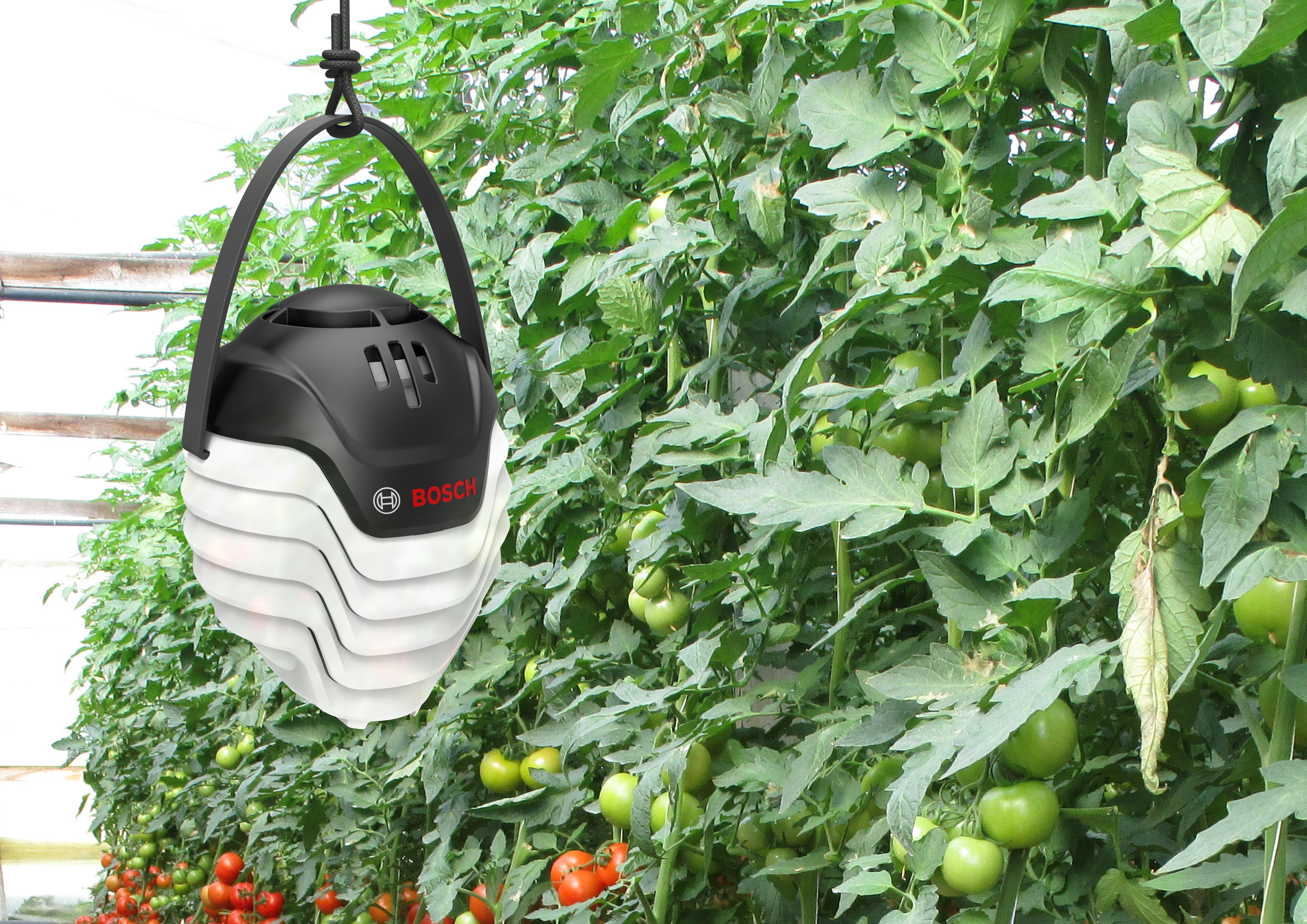 Plantect sorgt für gesunde Tomaten