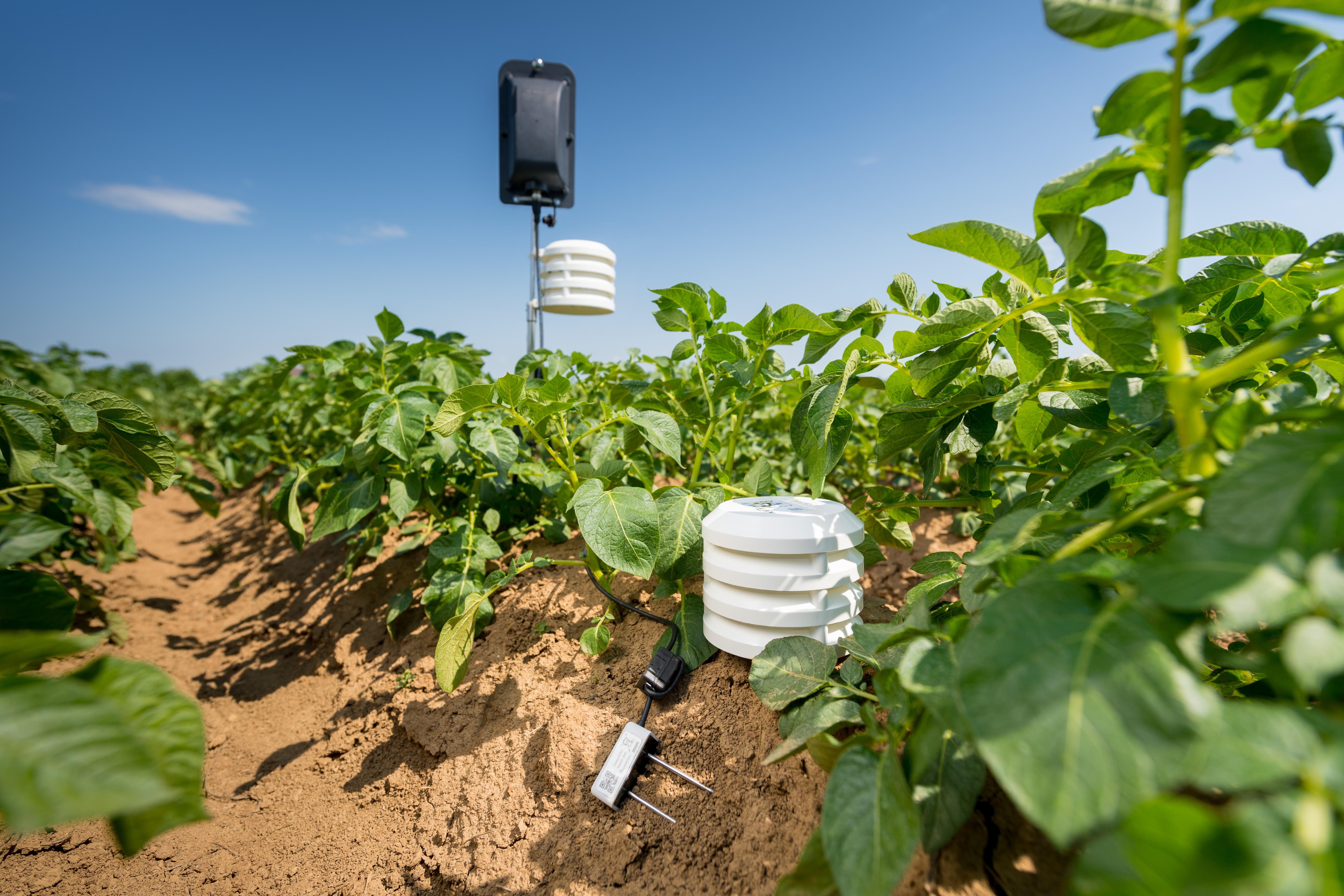 Bodenfeuchte-, Temperatur- und Luftfeuchte-Sensoren zur Feldüberwachung in Kartoffeln
