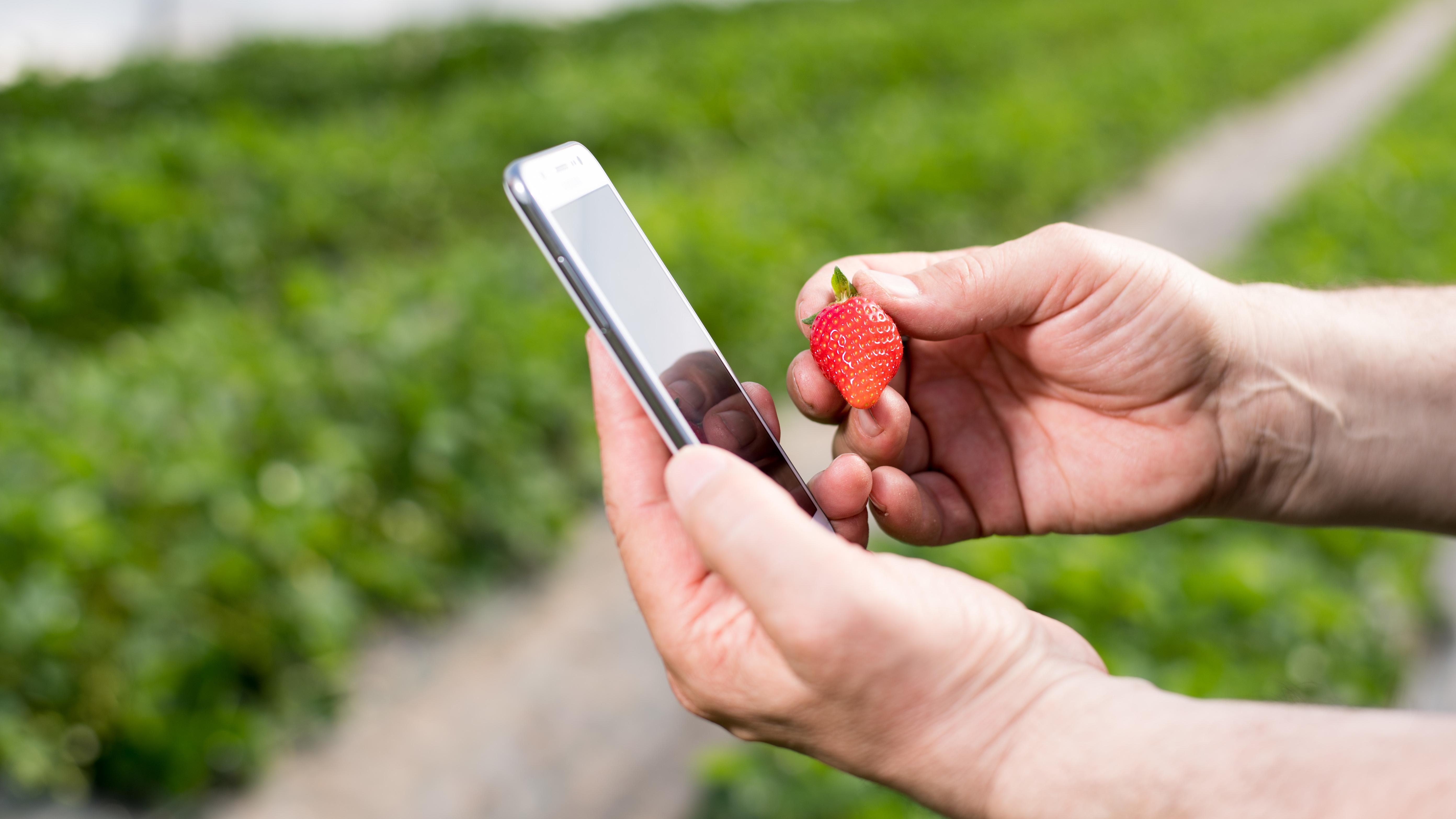 Über eine App auf dem Smartphone sieht der Landwirt auf einen Blick, ob auf seinen Feldern alles im grünen Bereich ist