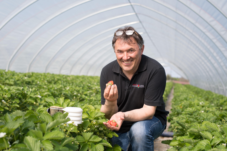 Landwirt Martin Bauer auf einem seiner Erdbeerfelder in Weinstadt