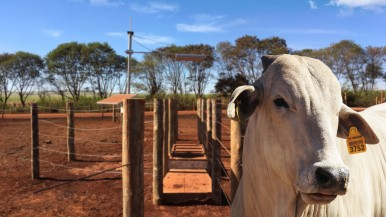 Monitoramento inteligente para criação de gado