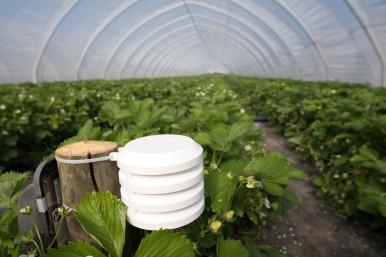 Aziende agricole high-tech: Bosch apre un mercato del valore di miliardi grazie alla tecnologia per il mondo agricolo